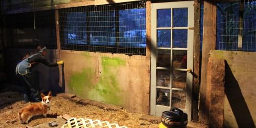 Homestead update a chicken run part 1 pocket pause - Craigslist little rock farm and garden ...