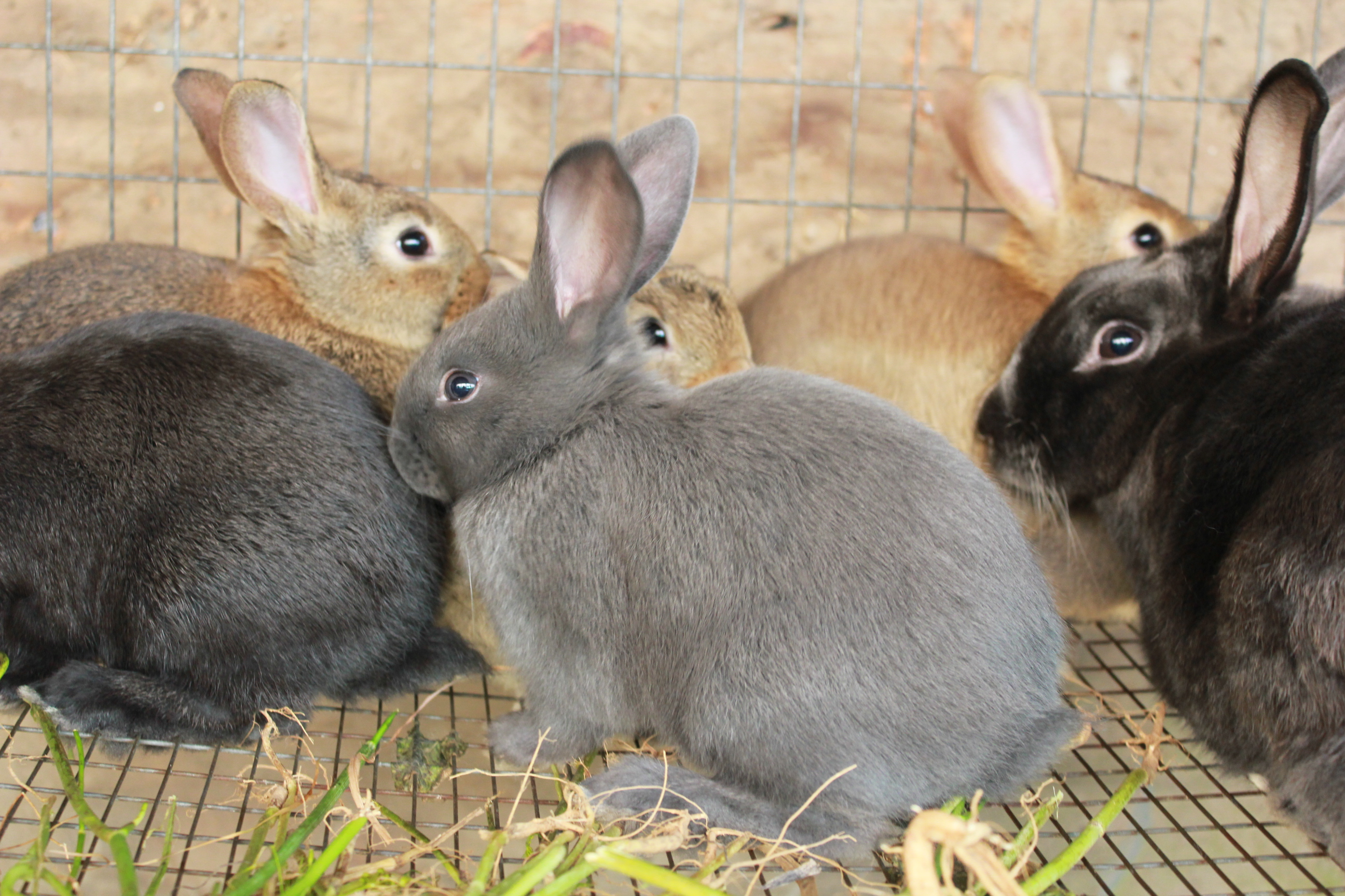 farming rabbits in new zealand business to make money from home