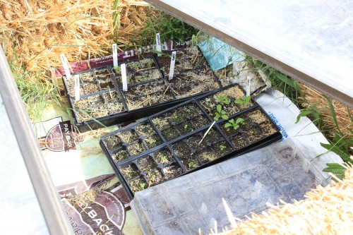 Extend your gardening season with a cold frame!