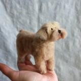 a fluffy Terrier